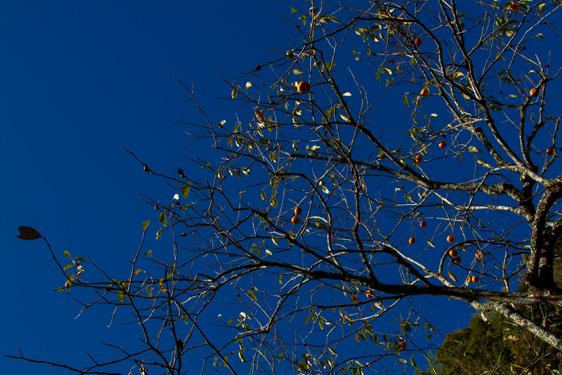秋の空 フィルターなし