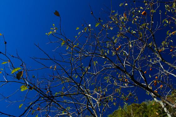 秋の空 フィルターあり