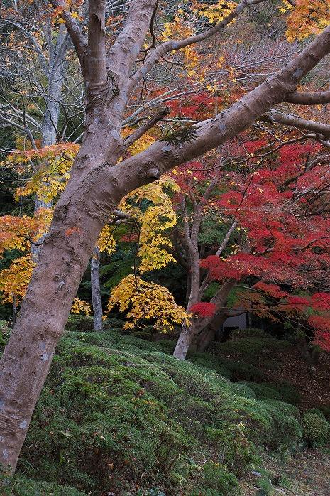 リソル生命の森