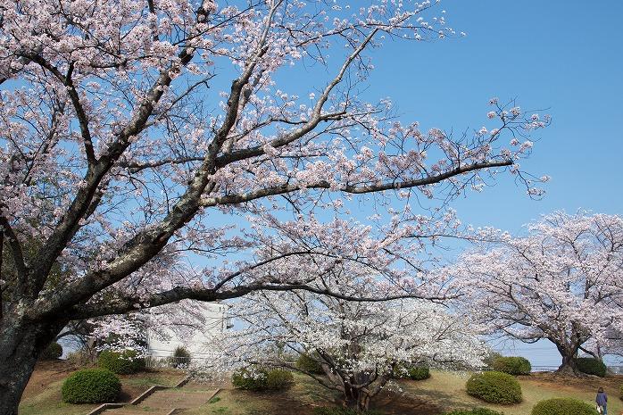 辰巳中央公園